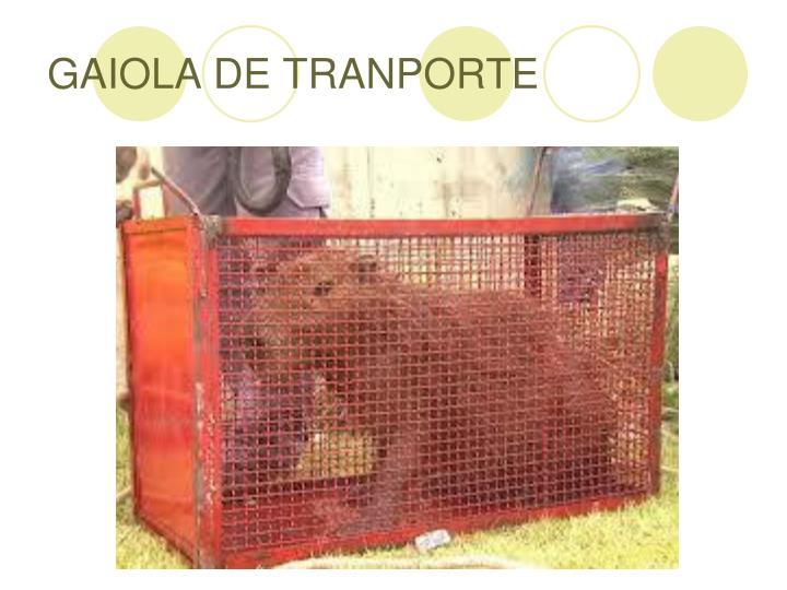GAIOLA DE TRANPORTE