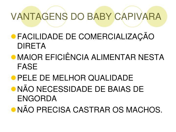 VANTAGENS DO BABY CAPIVARA