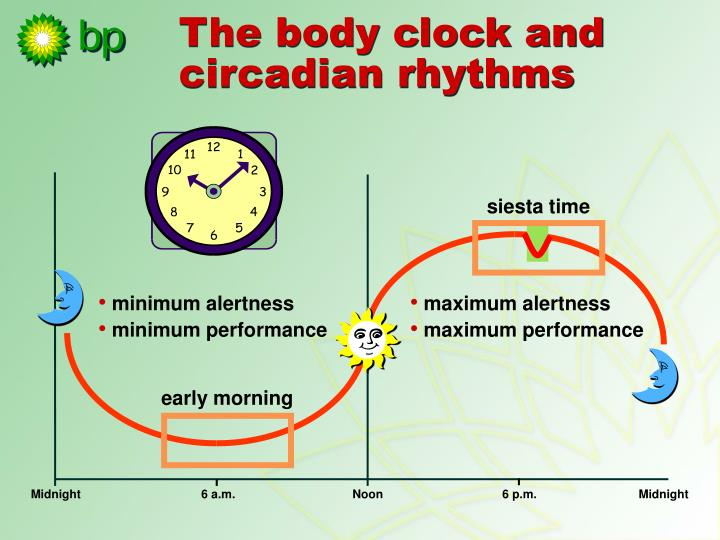 The body clock and