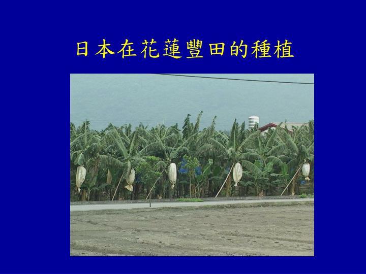 日本在花蓮豐田的種植