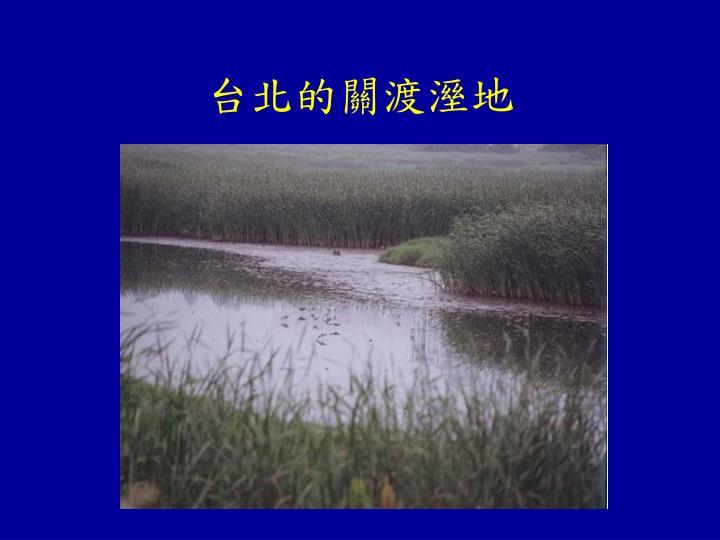 台北的關渡溼地