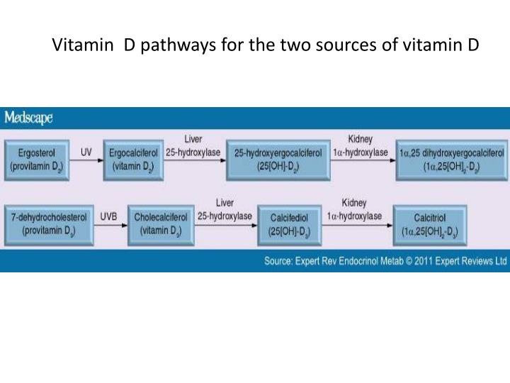 Vitamin  D pathways for the two sources of vitamin D