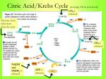 citric acid krebs cycle see page 138 in your book