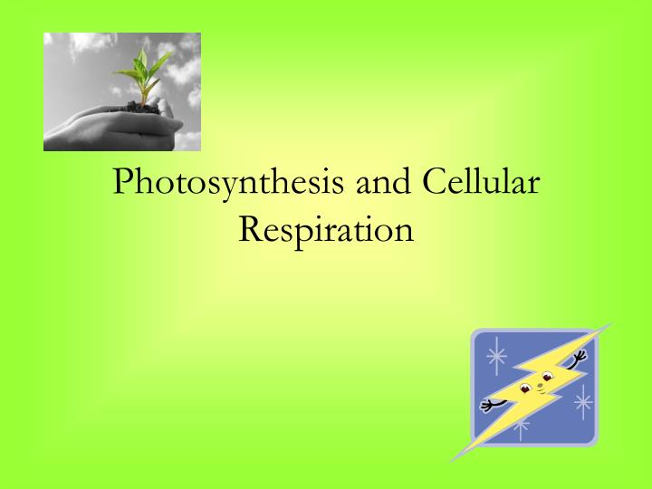photosynthesis and cellular respiration n.
