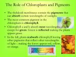 the role of chloroplasts and pigments1