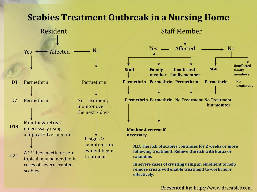 PPT - How to Kill Scabies ? - Everything to Know PowerPoint