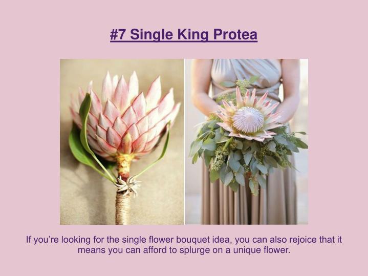#7 Single King Protea