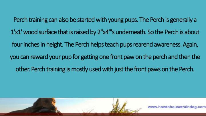 Perch training can also be started with young pups. The Perch is generally a 1'x1' wood