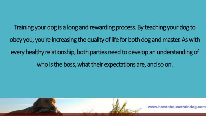 Training your dog is a long and rewarding process. By teaching your dog to obey you,