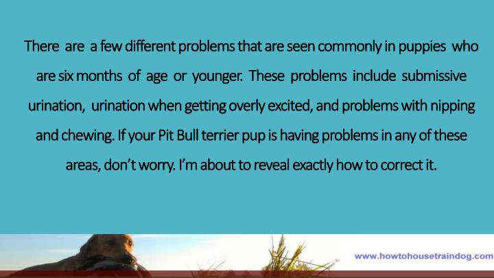 There  are  a few different problems that are seen commonly in puppies  who are six