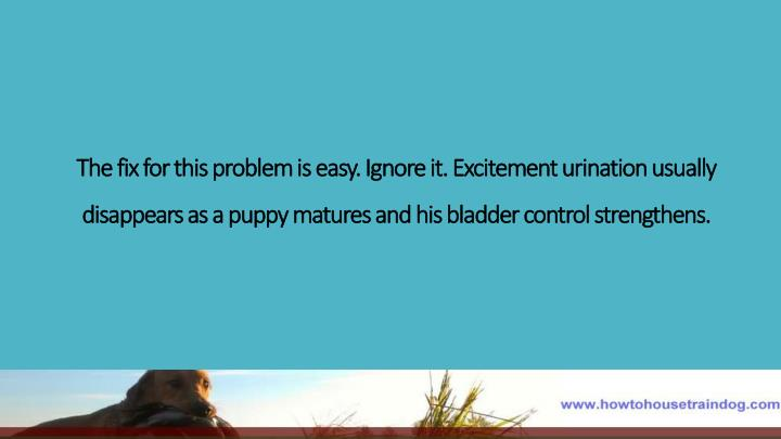 The fix for this problem is easy. Ignore it. Excitement urination usually disappears as a