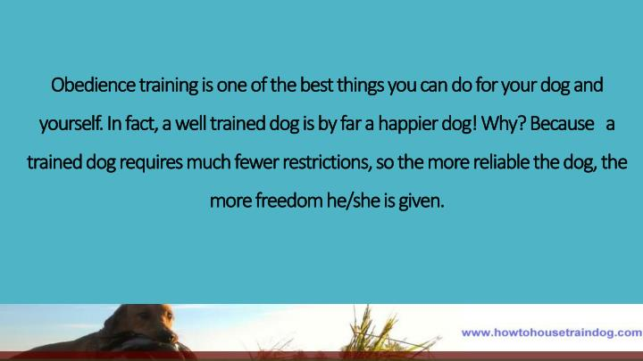 Obedience training is one of the best things you can do for your dog and yourself. In