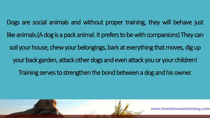 Dogs  are  social  animals  and  without  proper  training,  they  will  behave  just  like
