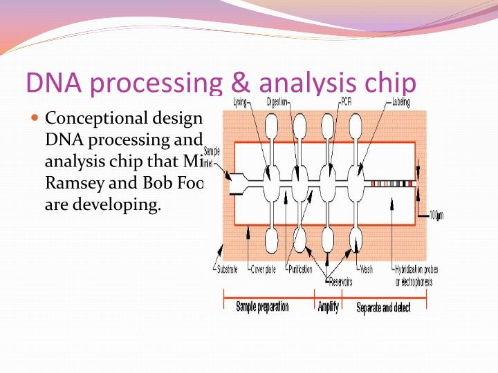 DNA processing & analysis chip