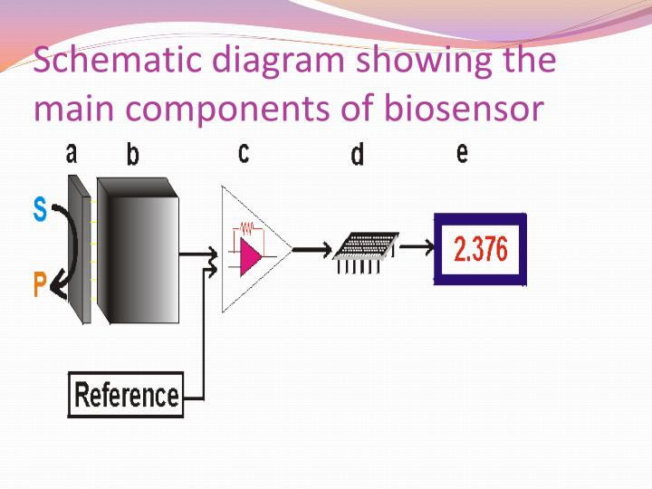 Schematic diagram showing the main components of biosensor