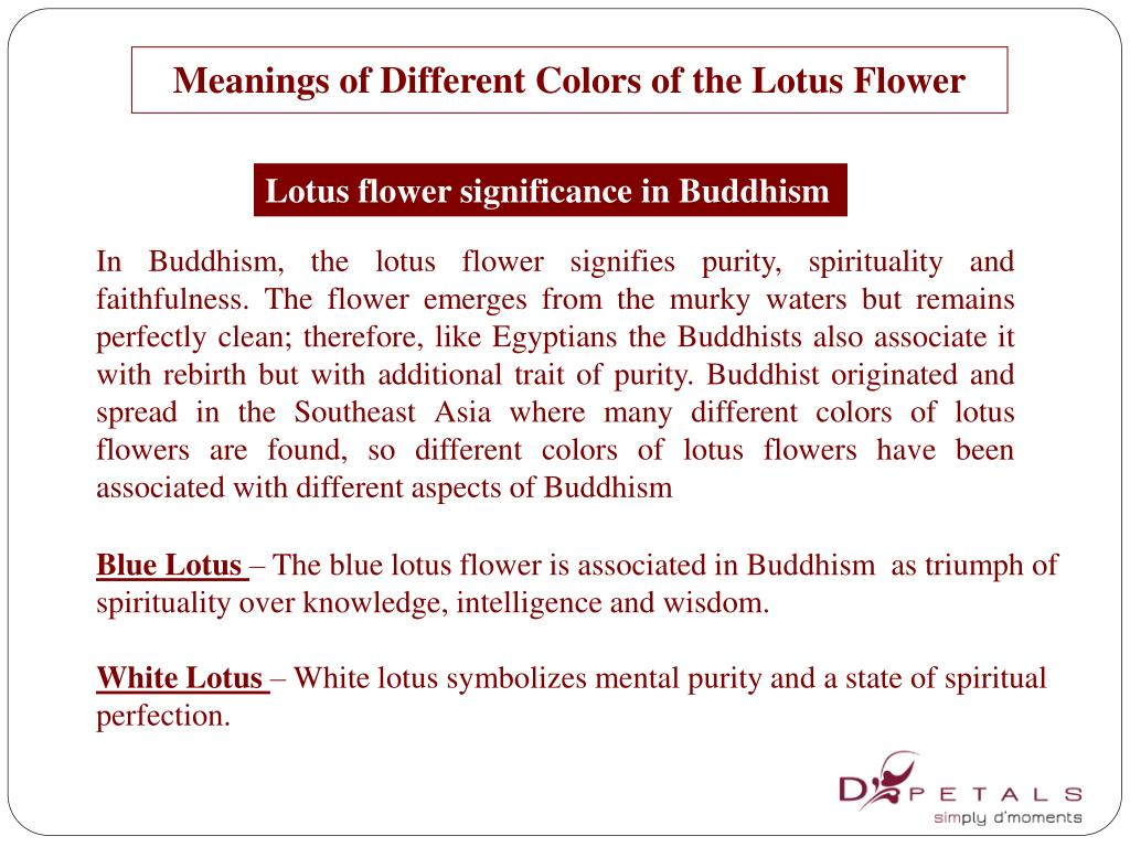 Ppt Meanings Of Different Colors Of The Lotus Flower Powerpoint